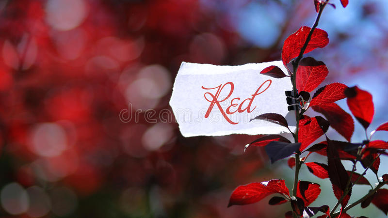 Color red in nature royalty free stock photo