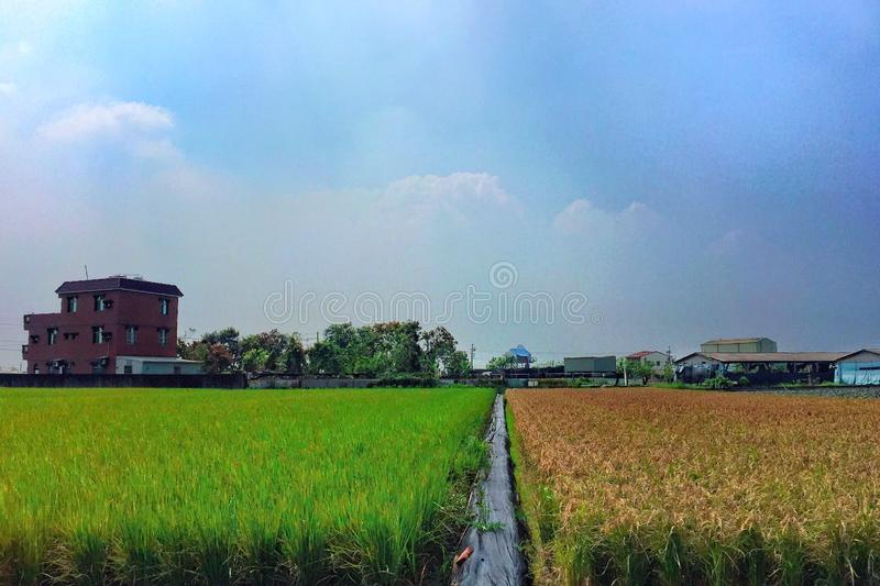 63/365 Color rice paddy stock images