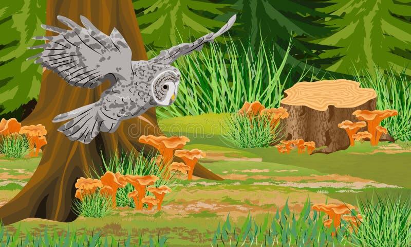 Color rojizo gris del búho en los troncos del bosque del otoño de la niebla y de los árboles, mízcalos de las setas del bosque, p libre illustration