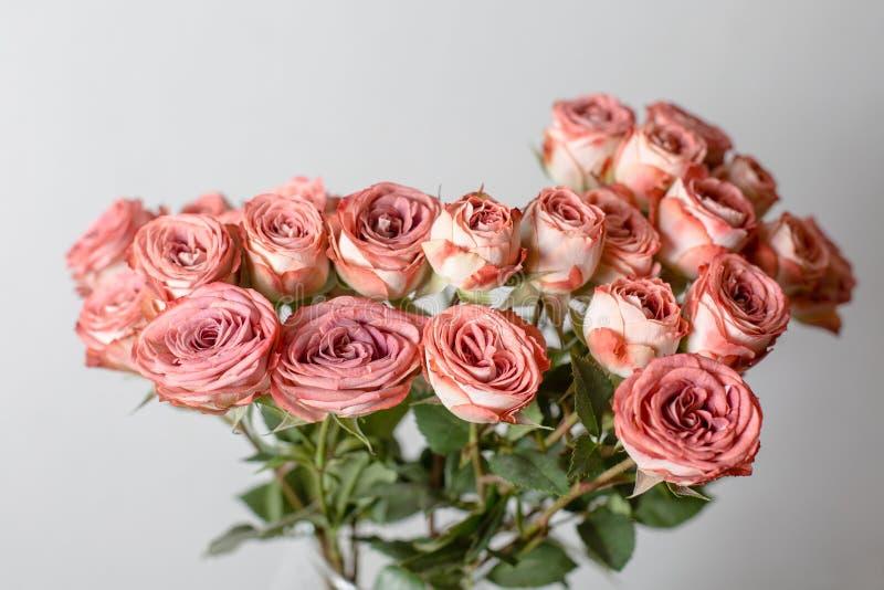 Color rosado polvoriento La rama de la flor subió, los brotes, primer imagenes de archivo