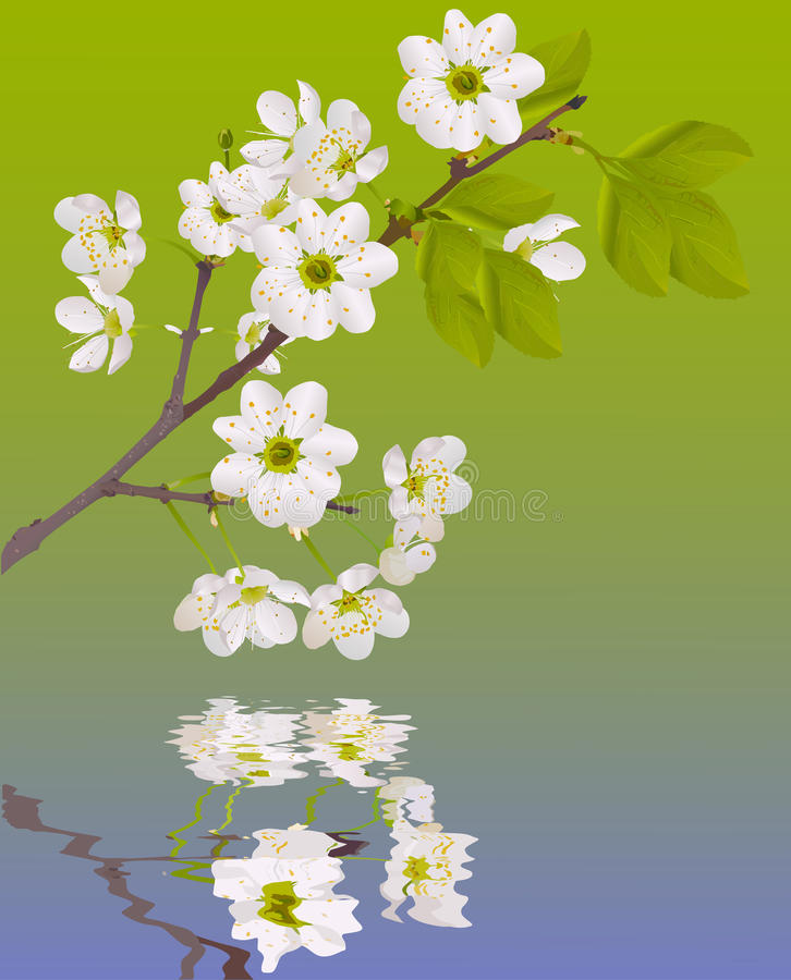Download Color Sakura Flowers With Reflection Stock Vector - Image: 17538735