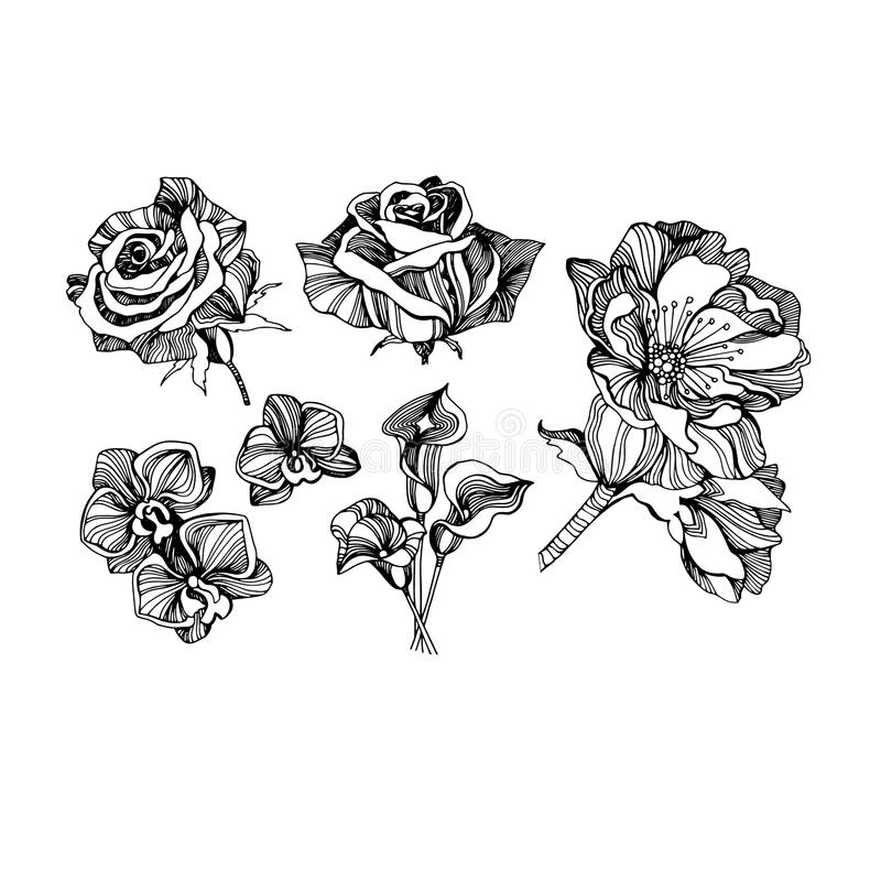 Color set collection drawings sketches, beautiful flowers different types linear vector illustration