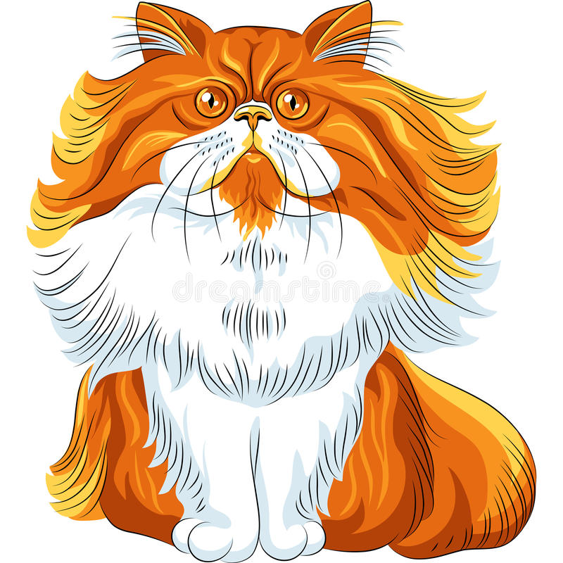 Color sketch fluffy Persian cat royalty free stock photo
