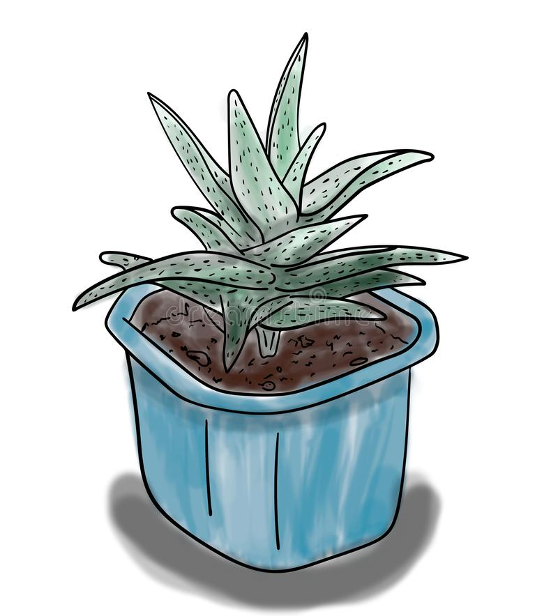 Color sketch of green aloe plant in blue pot, outline hand painted drawing. Digital illustration, color sketch of green aloe plant in blue pot, outline hand vector illustration