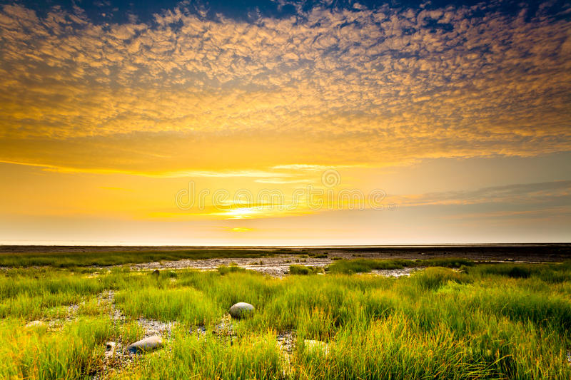 Color sky in the tropical wetland at sunset stock photography
