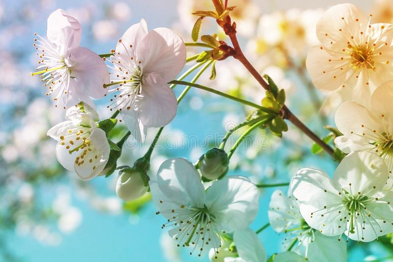 Color on the tree. Flowering spring tree branch stock photography