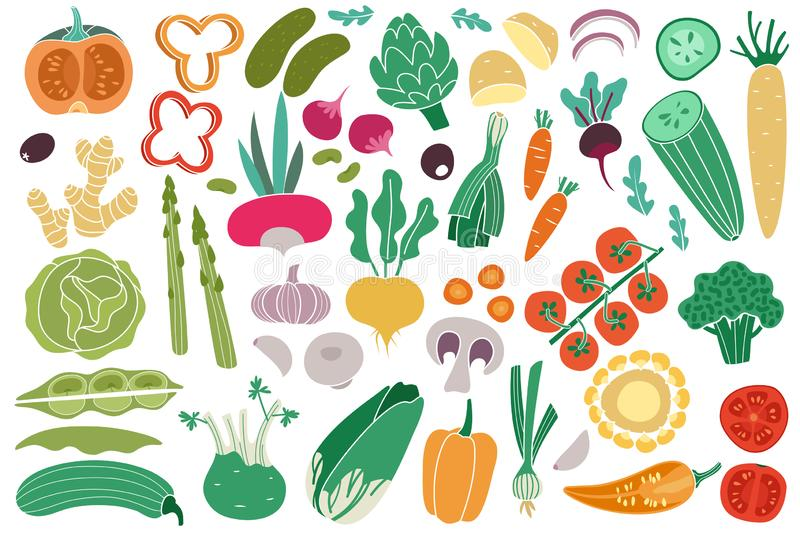 Color vegetables. Tomato zucchini potatoes champignon garlic radish. Vegan healthy meal organic food delicious vegetable. Vector doodle collection vector illustration