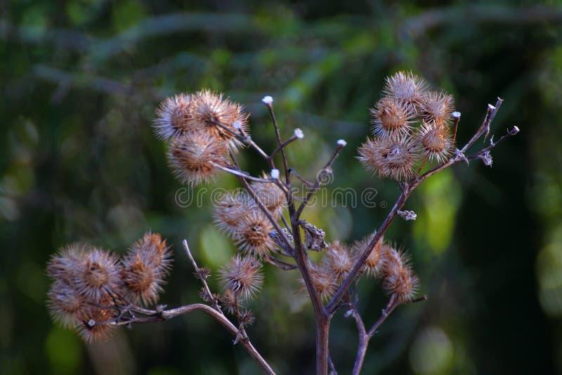 Color y flora fotos de archivo libres de regalías