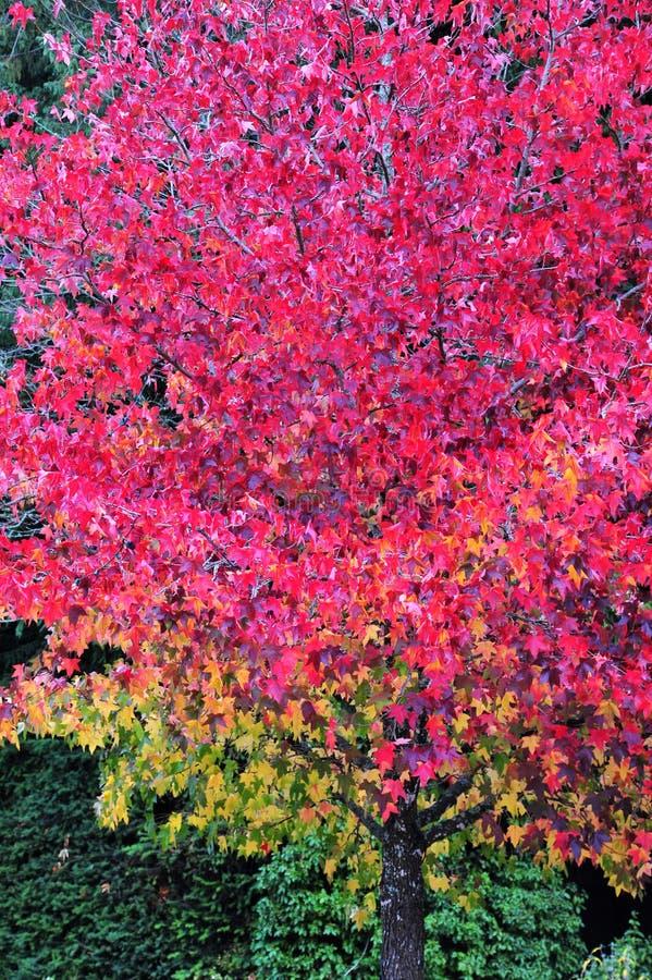 Color y gama de colores de la naturaleza foto de archivo libre de regalías