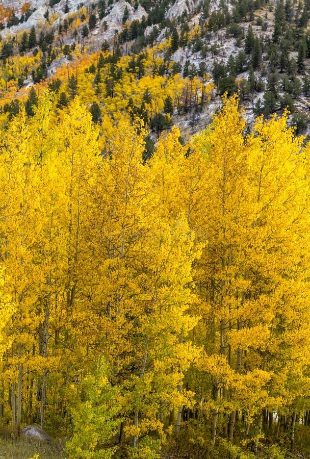 Color y nieve de la caída en Colorado fotos de archivo libres de regalías