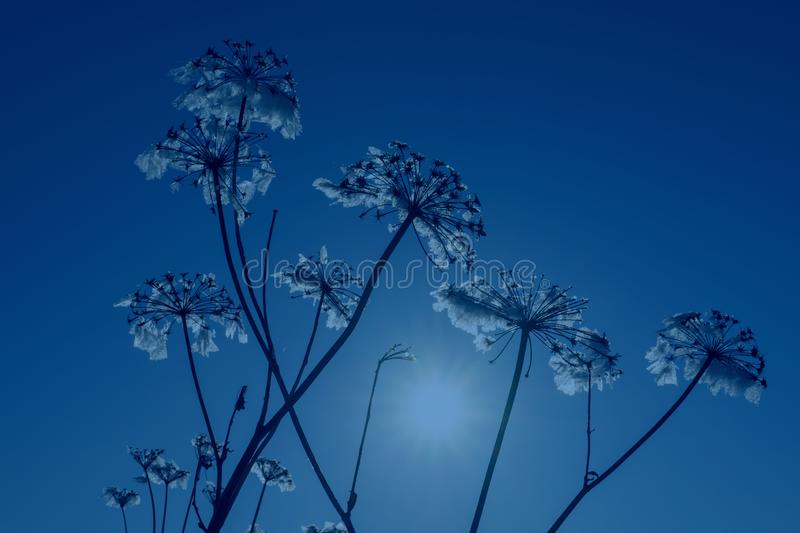 Color of the year 2020 classic blue. Winter landscape with dry frozen grass on background of classic blue sky and sun at sunset. Beautiful natural scenery stock photography