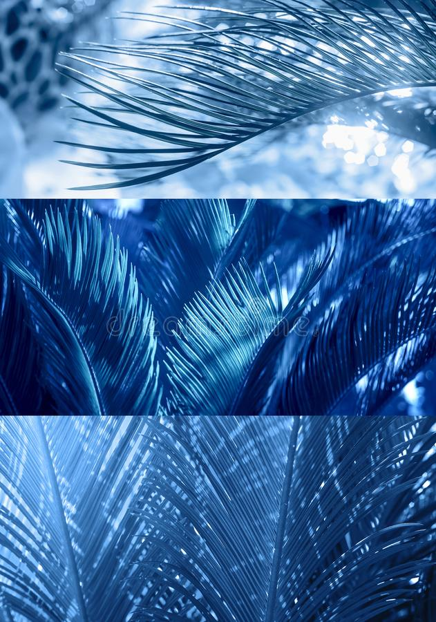 Natural collage background with palm green branches in blue color stock photo