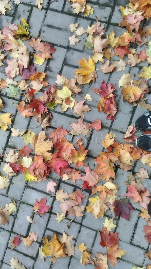 Coloração do outono imagens de stock royalty free