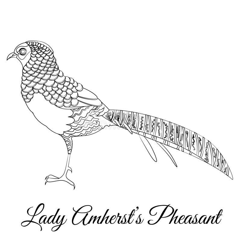 Coloração do pássaro do faisão da senhora Amherst ilustração stock