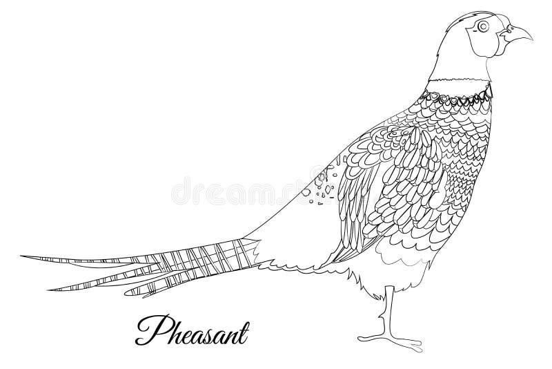 Coloração do pássaro do faisão Imagem do esbo?o do vetor ilustração royalty free