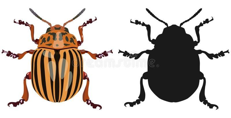 Colora a imagem do besouro de Colorado e da sua silhueta Ilustração do vetor ilustração do vetor