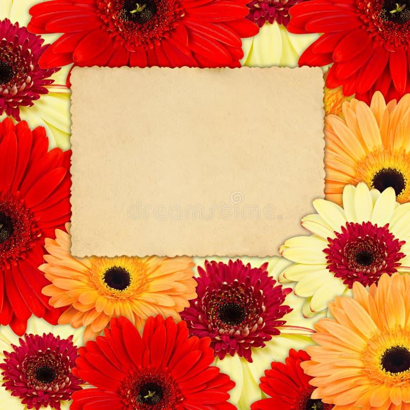 Colora o fundo das flores do gerber com foto velha ilustração do vetor