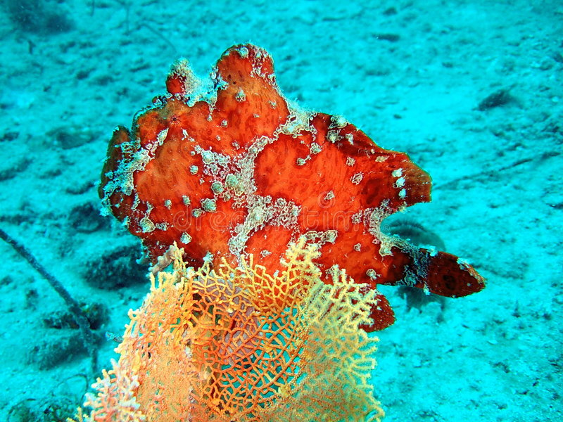 Colora o recife coral tropical foto de stock