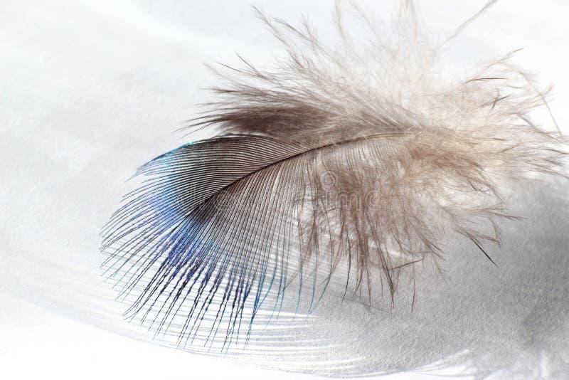 Colora a pena de pássaro que encontra-se no Livro Branco imagem de stock