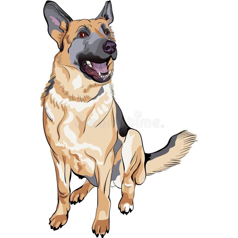 Colora a raça do pastor alemão do cão do esboço ilustração royalty free