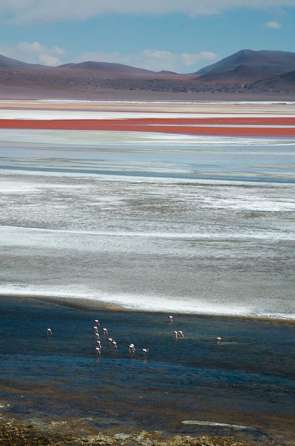 Colorada de Laguna avec des flamants dans la distance photos libres de droits