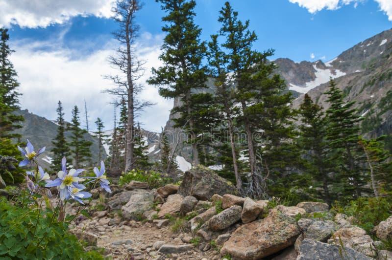Colorado aklejablommor arkivbild
