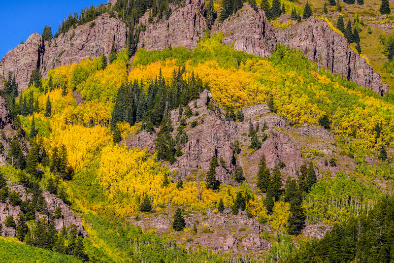Colorado aspen autumn fall colors stock images