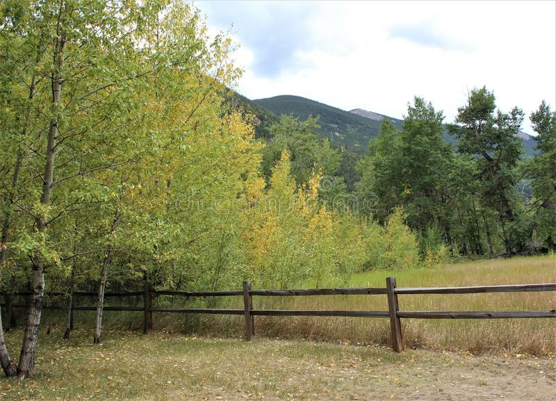 Colorado Aspens in the Mountains royalty free stock photography