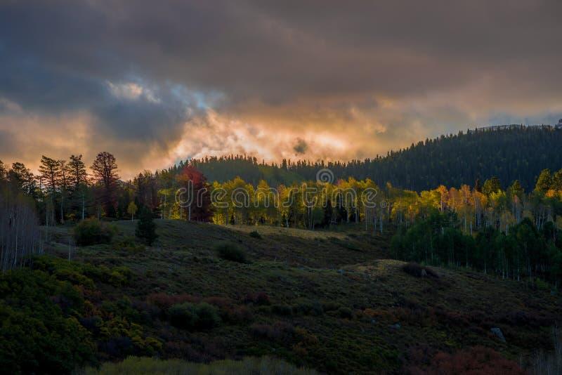 Colorado Autumn royalty free stock image