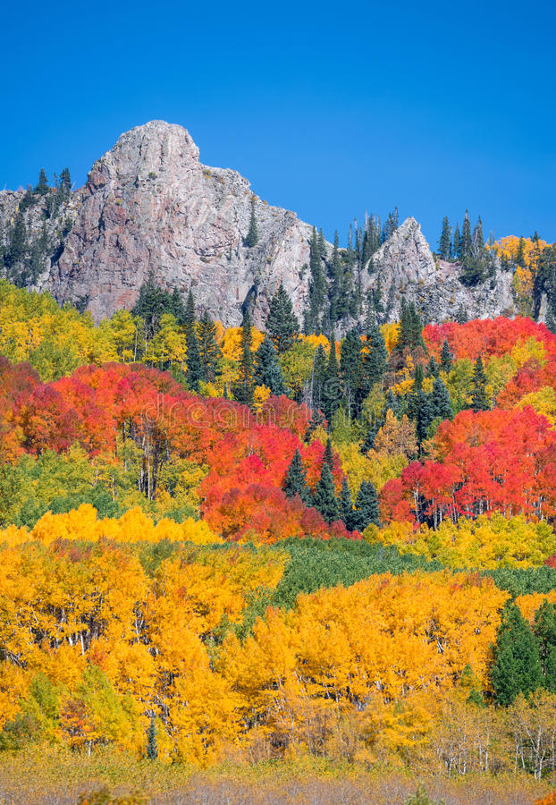 Colorado Autumn. A fall time picture showing the beautiful colors of autumn in Colorado royalty free stock photo