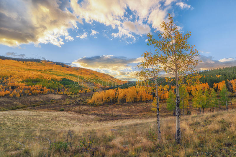 Colorado Autumn. A fall time picture showing the beautiful colors of autumn in Colorado stock photography