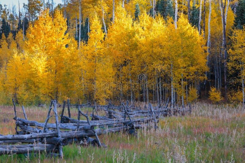 Colorado Autumn Scenery arkivbilder