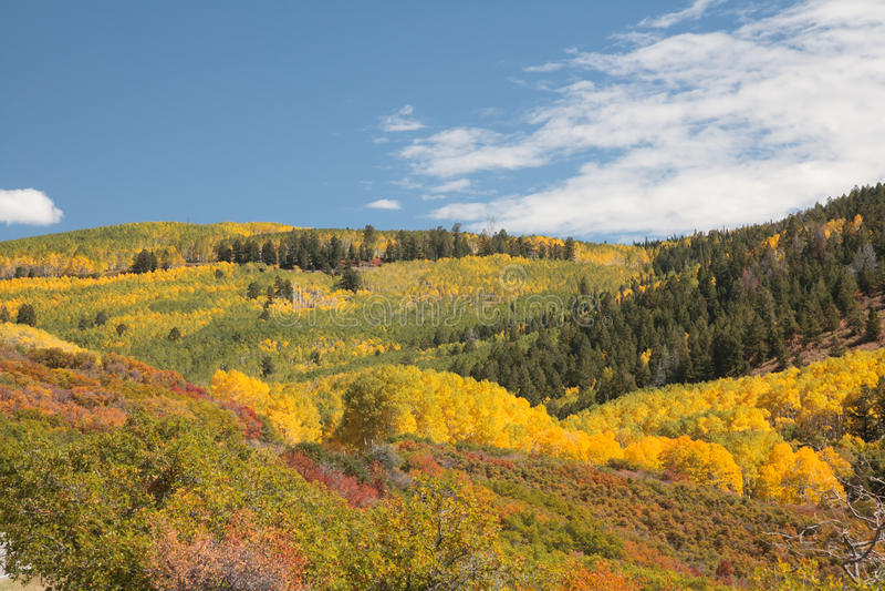 Colorado Autumn Scenery royaltyfria bilder