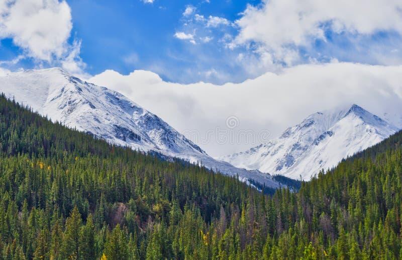 Colorado berg första Autumn Snow arkivbilder