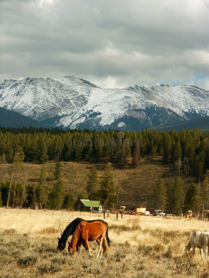 Colorado-Berge und -pferde stockbild