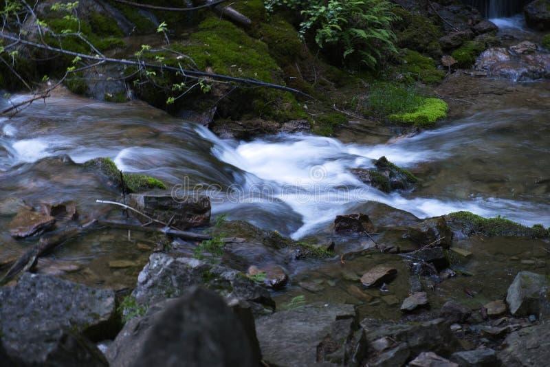 Colorado bergvattenfall med massor av nytt grönt landskap fotografering för bildbyråer