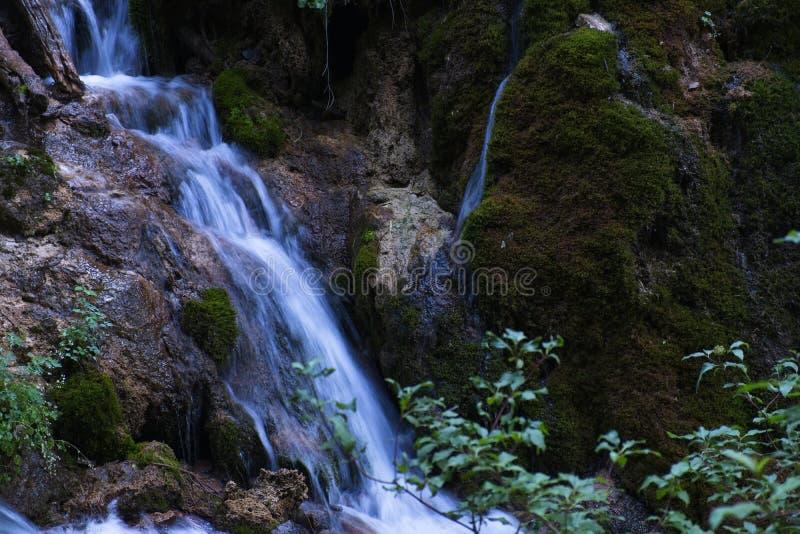 Colorado bergvattenfall med massor av nytt grönt landskap royaltyfri foto