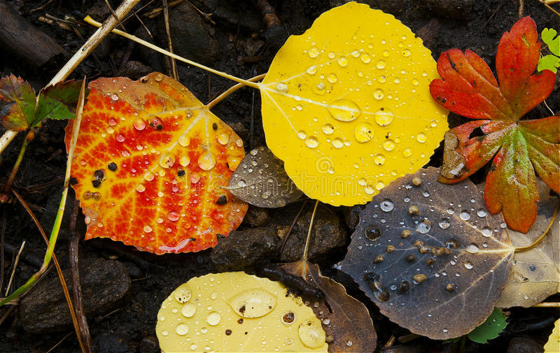 Download Colorado Fall-12 3558 stock image. Image of colour, nature - 27194583