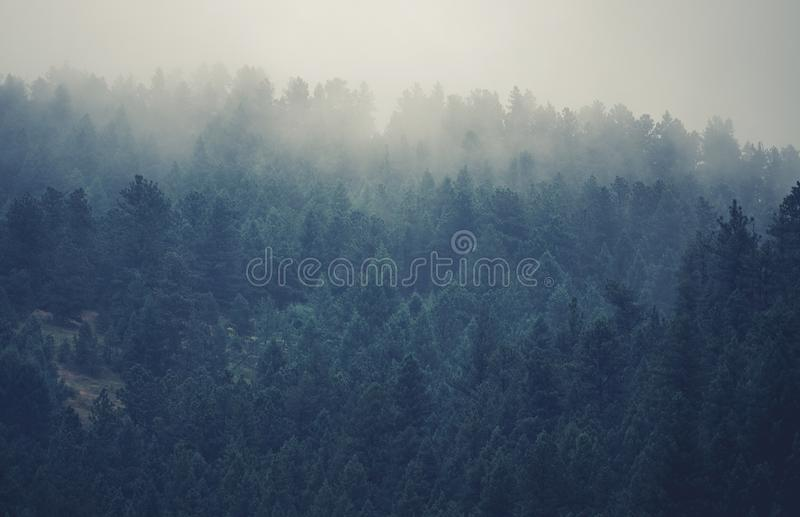 Colorado Foggy Hills. Colorado Forest Covered by Clouds stock images