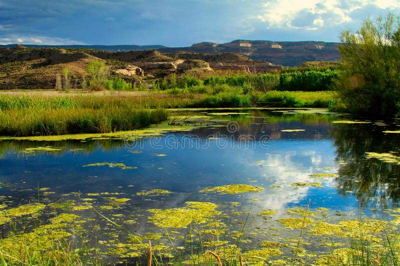 Colorado Marsh in Late Summer. Swamp algae and distant cliffs. Horsethief Canyon State Wildlife Area in western Colorado has views, migratory birds, and diverse stock images