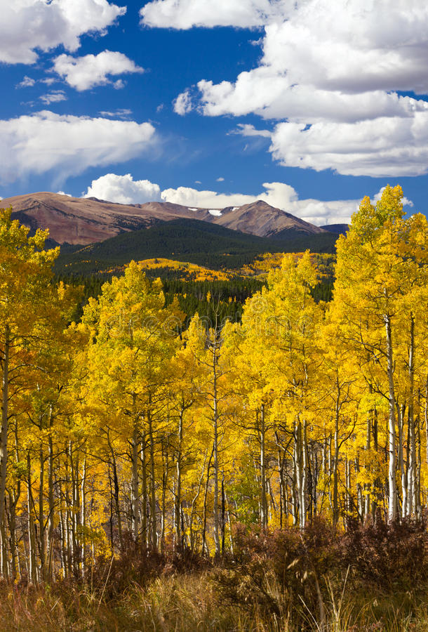 Colorado Rocky Mountains Fall Landscape. With Mountains and Aspen Trees - Kenosha Pass, CO stock photo