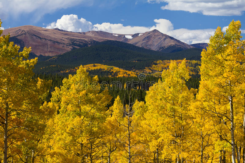 Colorado Rocky Mountains and Golden Aspens in Fall. Colorado Rocky Mountains and golden aspen trees in Fall royalty free stock images