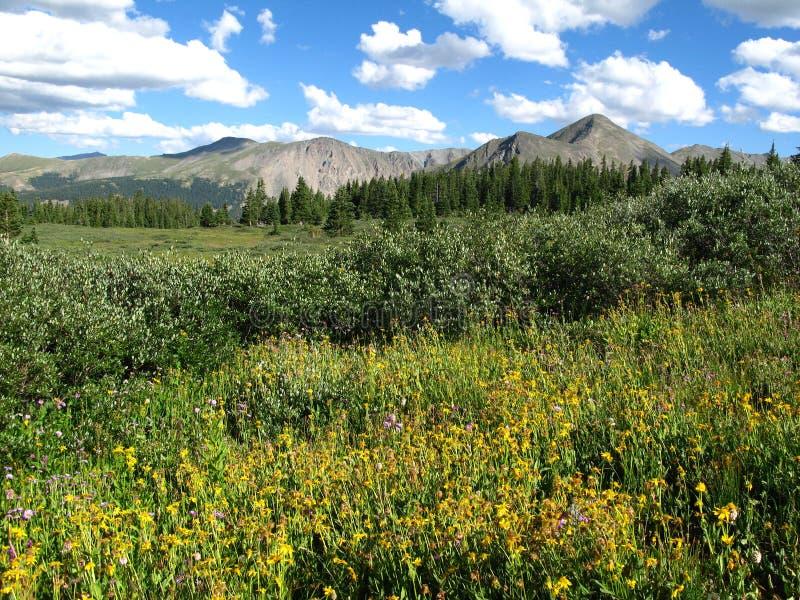 Download Colorado skies stock image. Image of clouds, summer, colorado - 3780577