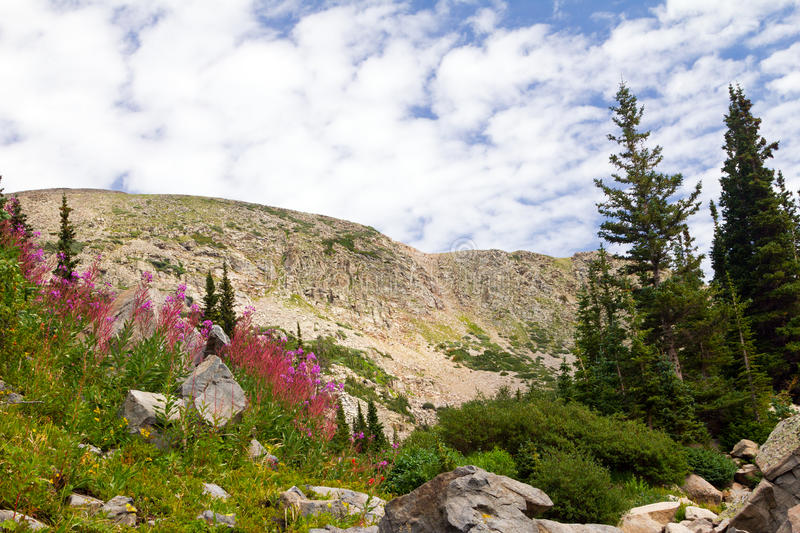Download Colorado Summer Flowers Mountain Landscape Stock Photo - Image: 26845046