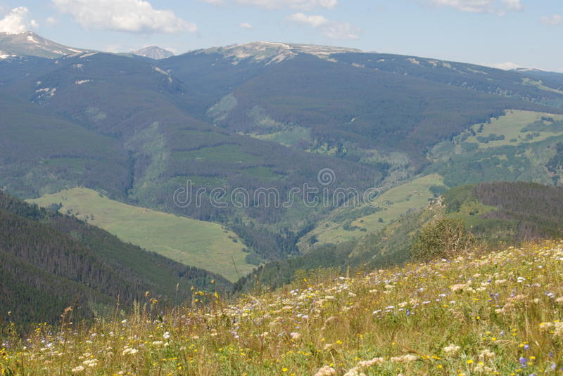Colorado Summertime Mountain Valley royalty free stock images