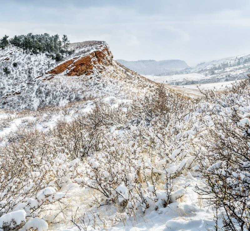 Colorado-Vorberge im frischen Schnee lizenzfreie stockbilder