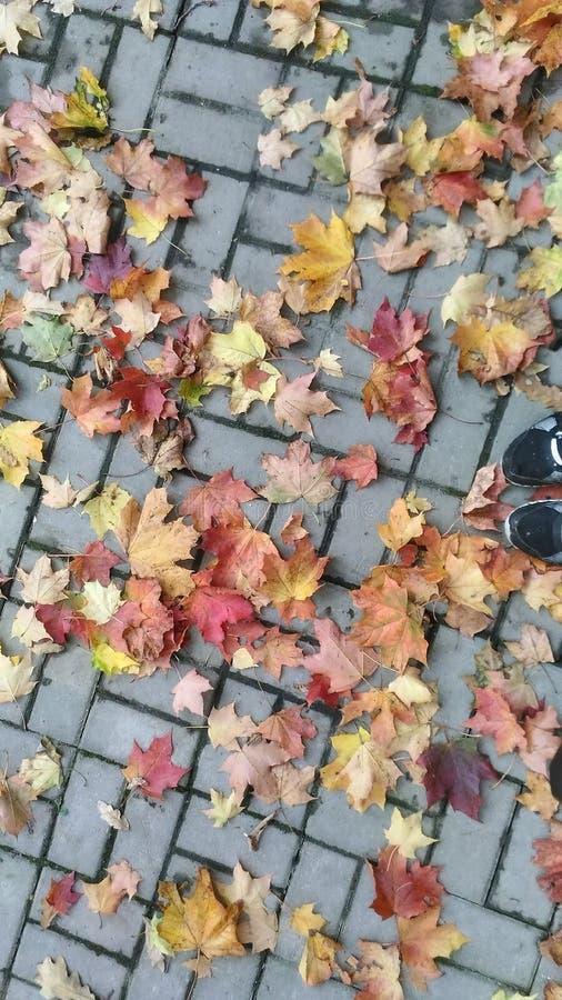 Coloration d'automne images libres de droits