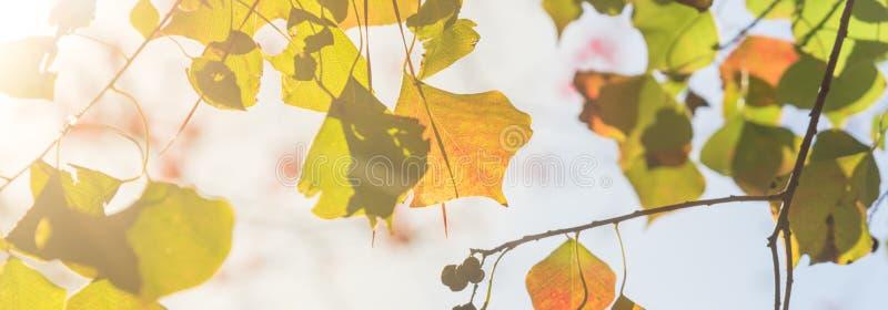 Colore cambiante durante la stagione di caduta a Houston, il Texas, U.S.A. immagini stock