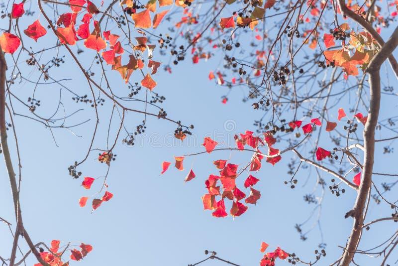 Colore cambiante durante la stagione di caduta a Houston, il Texas, U.S.A. fotografia stock libera da diritti