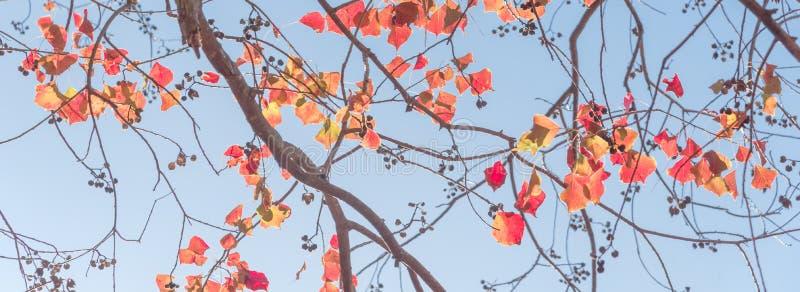 Colore cambiante durante la stagione di caduta a Houston, il Texas, U.S.A. fotografie stock